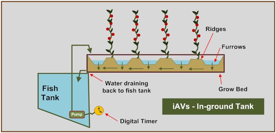 iAVs - In-ground tank